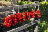 Red Hungarian Hot Chili Locally known as Paprika, Kalocsa, Hungary Photographic Print by Martin Zwick