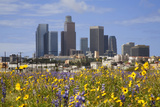 Los Angeles Skyline with Foreground of Flowers, California, USA Photographic Print by Peter Bennett