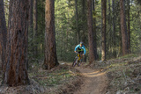 Mountain Biking on the Whitefish Trail, Montana, USA Fotoprint van Chuck Haney