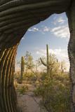Saguaro Forest Saguaro National Park, Arizona, USA Photographic Print by Jamie & Judy Wild