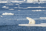 Polar Bear Sitting in Sunshine on Edge of Sea Ice, Svalbard, Norway Photographic Print by  Jaynes Gallery