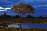 Okaukuejo Waterhole at Dusk, Etosha National Park, Namibia Photographic Print by David Wall