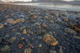 Low Tide at Sunrise, Lands End, Homer, Alaska, USA Photographic Print by Tom Norring