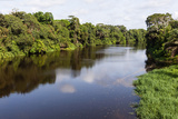 View of Plant Life on Lobe River, Kribi, Cameroon Photographic Print by Alida Latham