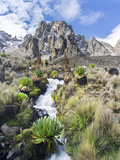 Central Mount Kenya National Park, Kenya Photographic Print by Martin Zwick