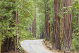 Road Through Redwoods, Big Basin Redwoods State Park, California, USA Photographic Print by  Jaynes Gallery