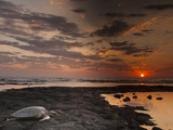 Green Sea Turtle at Sunset, Honokohau Bay, Hawaii, USA Photographic Print by  Jaynes Gallery