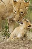 Lion with Young One, Maasai Mara Wildlife Reserve, Kenya Fotografie-Druck von Jagdeep Rajput