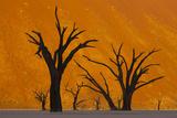 Namib-Naukluft National Park, Namibia Fotografisk tryk af Art Wolfe