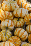 Ornamental Pumpkins, Avila Beach, California, USA Photographic Print by Cindy Miller Hopkins