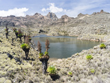 Lake, Mount Kenya National Park, Kenya Photographic Print by Martin Zwick