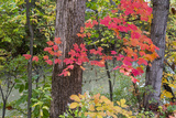 Autumn Colors at Independence State Park in Defiance, Ohio, USA Photographic Print by Chuck Haney