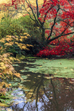 Fall Colors, Arboretum, Seattle, Washington, USA Photographic Print by Tom Norring