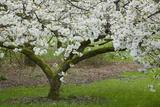 University of Washington Botanic Garden, Seattle, Washington, USA Photographic Print by Charles Gurche