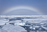 Polar Bear on Broken Sea Ice Beneath Rainbow, Svalbard, Norway Photographic Print by  Jaynes Gallery