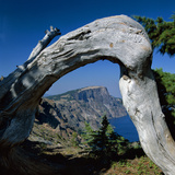 Curved Log Frames Crater Lake and the Watchman, Oregon, USA Photographic Print by Jerry Ginsberg