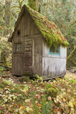 Weathered Old Cabin in Forest, Olympic National Park, Washington, USA Photographic Print by  Jaynes Gallery