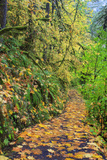 Forest Trail, Silver Falls State Park, Oregon, USA Photographic Print by Jamie & Judy Wild