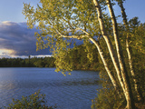 Paper Birch Along Fish Creek Pond at Sunset, New York, USA Photographic Print by Charles Gurche