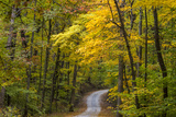 Scenic Road Through Autumn Forest Indiana, USA Photographic Print by Chuck Haney