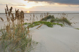 Sea Oats on Gulf of Mexico at South Padre Island  Texas  USA