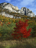Highlighed Red Tree, Monongahela National Forest, West Virginia, USA Photographic Print by Charles Gurche