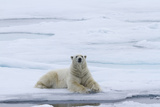 Polar Bear Lying on Snow Next to Water, Svalbard, Norway Photographic Print by  Jaynes Gallery