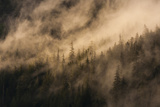 Fog on Baranof Island, Tongass National Forest Alaska, USA Photographic Print by  Jaynes Gallery