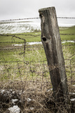 Wooden Fence Post around a Wheat Field, Palouse, Washington, USA Photographic Print by Brent Bergherm