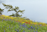 Wildflowers Overlooking Ocean, Yellow Island, Washington, USA Photographic Print by  Jaynes Gallery