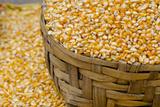 Dried Corn in Basket, Otavalo Handicraft Market, Quito, Ecuador Fotografie-Druck von Cindy Miller Hopkins