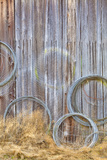 Wire Coiled on Barn Wall, Petersen Farm, Silverdale, Washington, USA Photographic Print by  Jaynes Gallery
