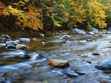 Autumn Beside the Cold River, Savoy State Forest Massachusetts, USA Photographic Print by  Jaynes Gallery