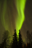 View of Northern Lights and Stars, Chena Hot Springs, Alaska, USA Photographic Print by  Jaynes Gallery