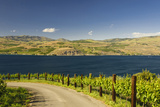 Vineyard in the Lake Chelan AVA, Washington, USA Photographic Print by Richard Duval