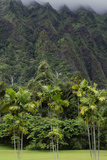 Cliffs of Koolau Mountains Above Palm Trees, Oahu, Hawaii, USA Photographic Print by Charles Crust