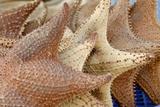 Souvenir Starfish and Seashells for Sale, Livingston, Guatemala Fotografie-Druck von Cindy Miller Hopkins