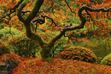 Autumn at the Portland Japanese Garden, Portland, Oregon, USA Photographic Print by Michel Hersen