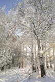 Fresh Snowfall on Quaking Aspens, Glacier National Park, Montana, USA Photographic Print by Chuck Haney
