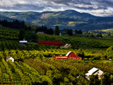 Red Barn Amid Orchards, Hood River, Oregon, USA Photographic Print by  Jaynes Gallery