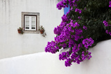 Bougainvillea Blooming in the Town of Obidos, Portugal Photographic Print by Julie Eggers