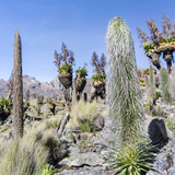 Landscape, Mount Kenya National Park, Kenya Photographic Print by Martin Zwick