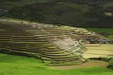 Spectacular Green Rice Field in Rainy Season, Ambalavao, Madagascar Photographic Print by Anthony Asael