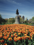 Tulip Patch with Statue of Washington, Boston, Massachusetts, USA Photographic Print by Walter Bibikow