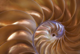 Abstract of a Nautilus Shell, Georgia, USA Photographic Print by Joanne Wells