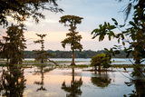 Bald Cypress at Sunset, Atchafalaya Basin, Louisiana, USA Photographic Print by Alison Jones