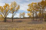 Prairie Grassland, Beatrice, Nebraska, USA Photographic Print by Walter Bibikow