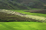 Spectacular Green Rice Field in Rainy Season, Ambalavao, Madagascar Photographic Print by Anthony Asael