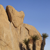 View of Heart-Shaped Rock, Joshua Tree National Park, California, USA Photographic Print by  Jaynes Gallery