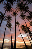 Palm Trees, Royal Kamehameha Coconut Palm Grove, Molokai, Hawaii, USA Photographic Print by Charles Gurche